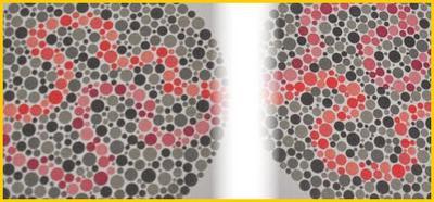 Rozpoznawanie barw u kierowców pojazdów uprzywilejowanych